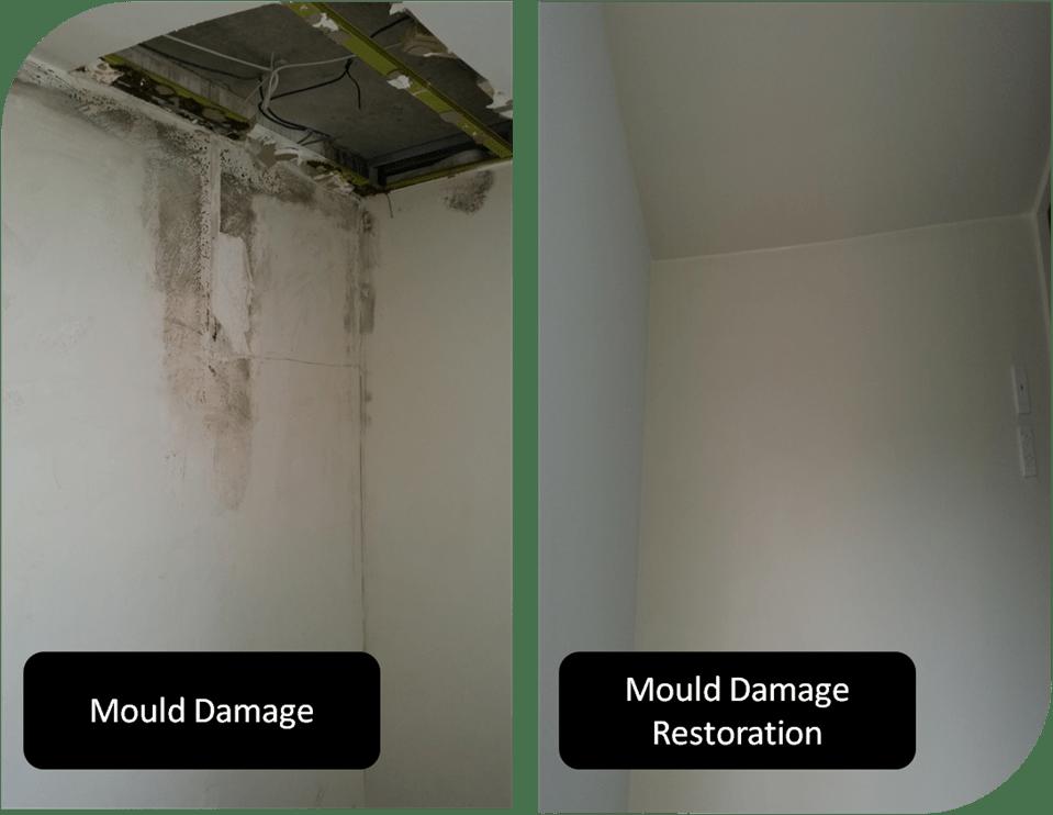 Mould Damage Removal Experts Melbourne