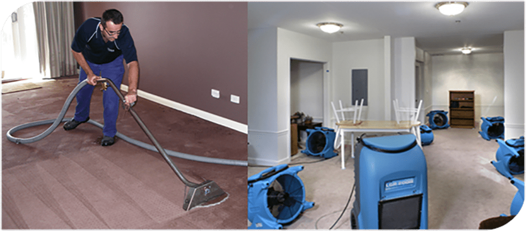 Professional Carpet Cleaners in Fitzroy